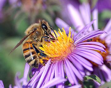 Včely a hmyz